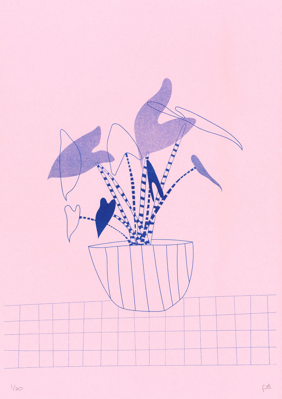 Alocasia Zebrina plant illustration inspired illustration, beautiful poster made by Fernanda Maria, a local artist originally from Chile and based in Barcelona